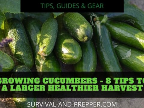 green cucumbers in a bushel