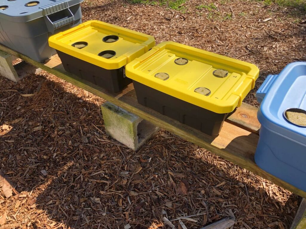 Yellow and black buckets with holes for hydroponic plants